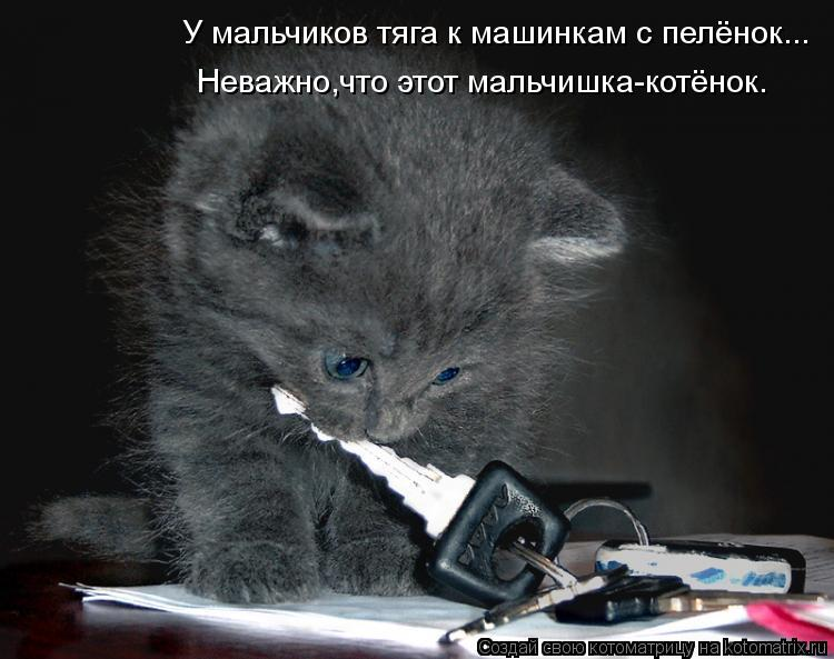 Котоматрица: У мальчиков тяга к машинкам с пелёнок... Неважно,что этот мальчишка-котёнок.