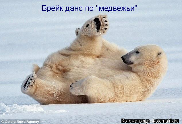 "Котоматрица: Брейк данс по ""медвежьи"""