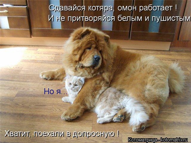 Котоматрица: Сдавайся котяра, омон работает ! И не притворяйся белым и пушистым Но я... Хватит, поехали в допросную !