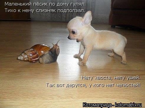 Котоматрица: Маленький пёсик по дому гулял. Тихо к нему слизняк подползал. Нету хвоста, нету ушей. Так вот дерутся, у кого нет челюстей!