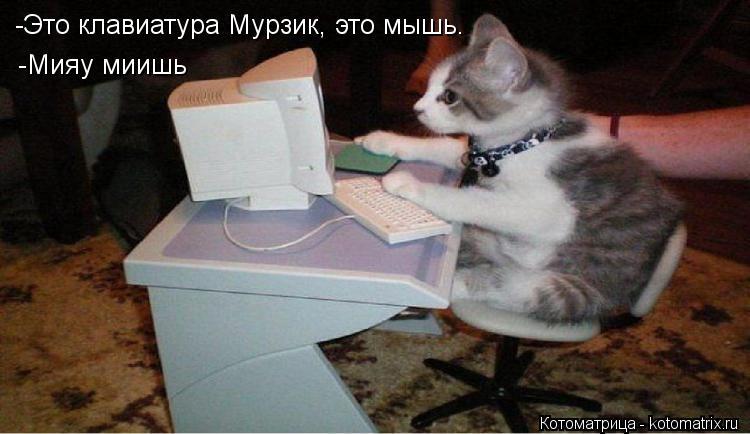 Котоматрица: -Это клавиатура Мурзик, это мышь. -Мияу миишь