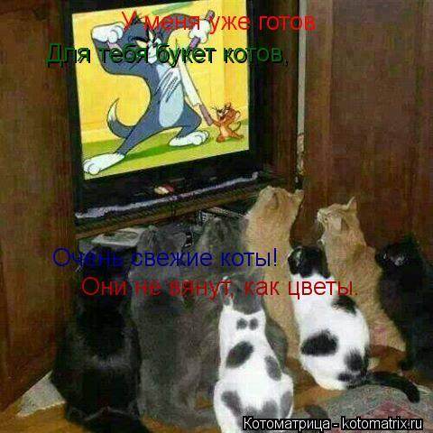 Котоматрица: У меня уже готов      Для тебя букет котов,    Очень свежие коты!   Они не вянут, как цветы.