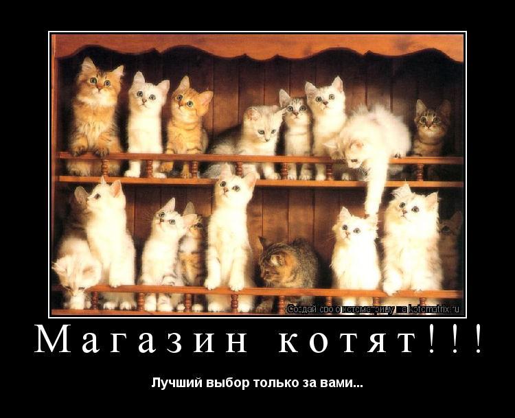 Котоматрица: Магазин котят!!! Лучший выбор только за вами...