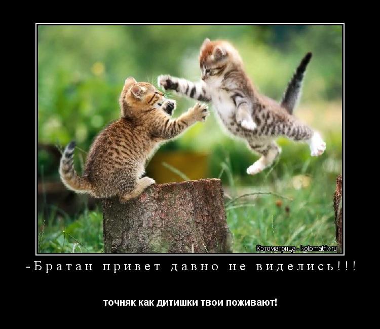 Котоматрица: -Братан привет давно не виделись!!! точняк как дитишки твои поживают!