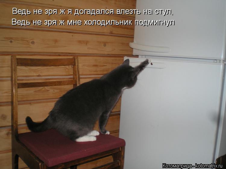 Котоматрица: Ведь не зря ж я догадался влезть на стул, Ведь не зря ж мне холодильник подмигнул