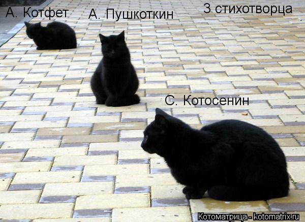 Котоматрица: 3 стихотворца А. Пушкоткин А. Котфет С. Котосенин