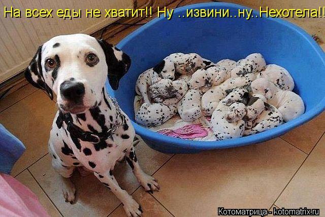 Котоматрица: На всех еды не хватит!! Ну ..извини..ну..Нехотела!!