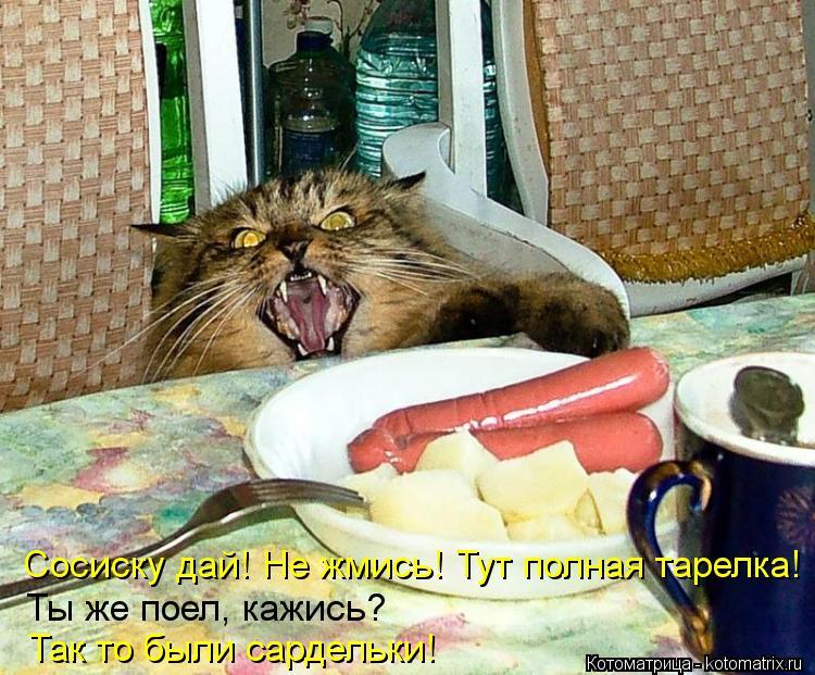Котоматрица: Сосиску дай! Не жмись! Тут полная тарелка! Ты же поел, кажись?  Так то были сардельки!