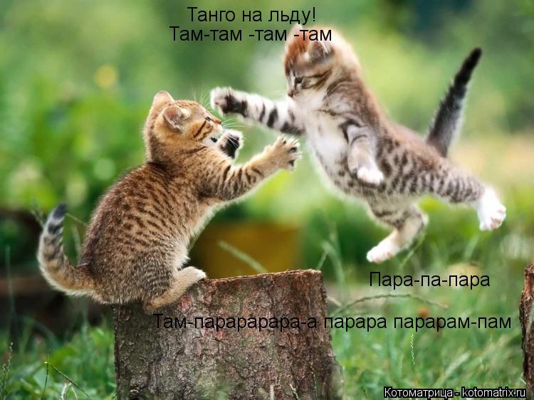Котоматрица: Танго на льду! Там-там -там -там Пара-па-пара Там-парарарара-а парара парарам-пам