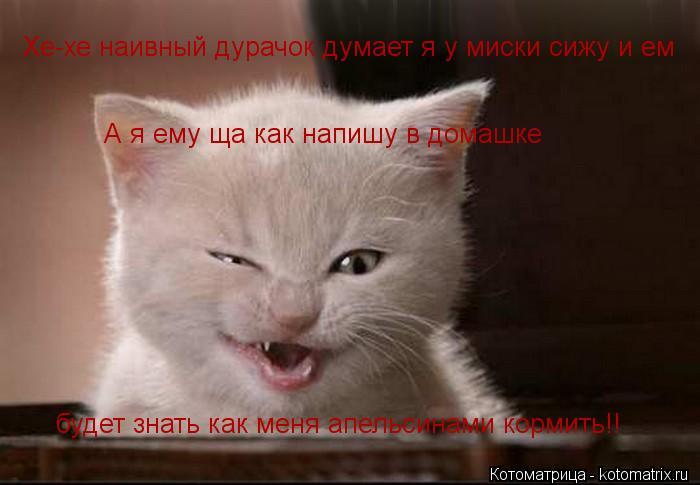 Котоматрица: Хе-хе наивный дурачок думает я у миски сижу и ем будет знать как меня апельсинами кормить!! А я ему ща как напишу в домашке