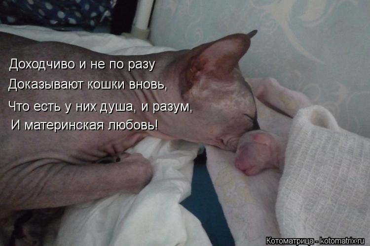 Котоматрица: Доходчиво и не по разу Доказывают кошки вновь, Что есть у них душа, и разум, И материнская любовь!