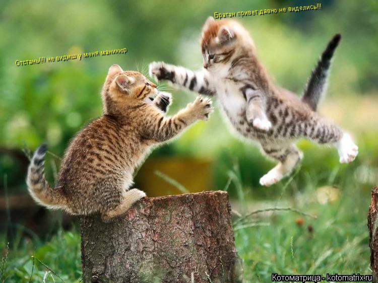 Котоматрица: Братан привет давно не виделись!!! Отстань!!!! не видиш у меня маникюр