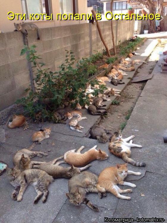 Котоматрица: Эти коты попали в Остальное