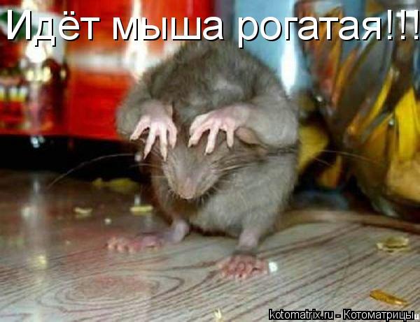 Котоматрица: Идёт мыша рогатая!!!