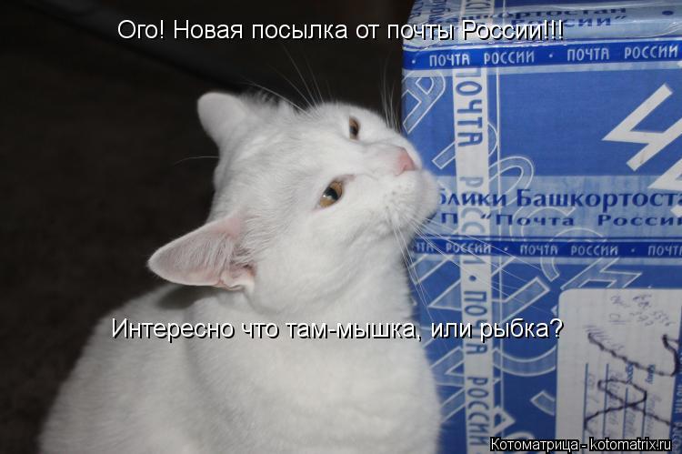 Котоматрица: Ого! Новая посылка от почты России!!! Интересно что там-мышка, или рыбка?