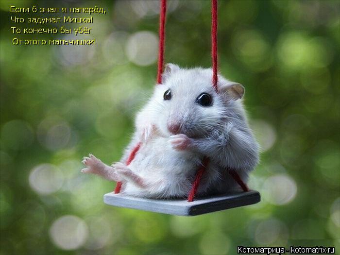 Котоматрица: Если б знал я наперёд, Что задумал Мишка! То конечно бы убёг От этого мальчишки!