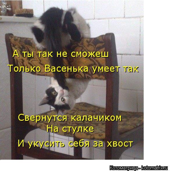 Котоматрица: А ты так не сможеш Только Васенька умеет так Свернутся калачиком  На стулке И укусить себя за хвост