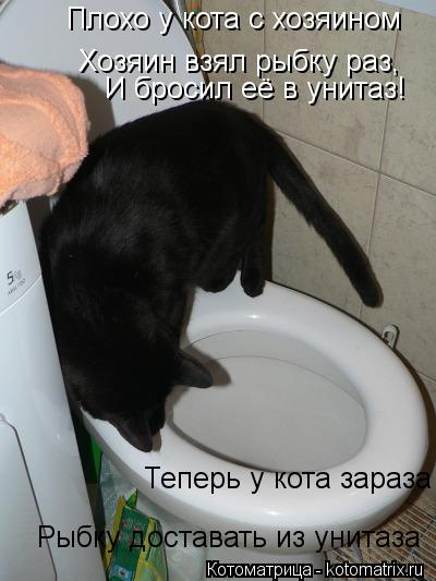 Котоматрица: Плохо у кота с хозяином Хозяин взял рыбку раз, И бросил её в унитаз! Теперь у кота зараза Рыбку доставать из унитаза