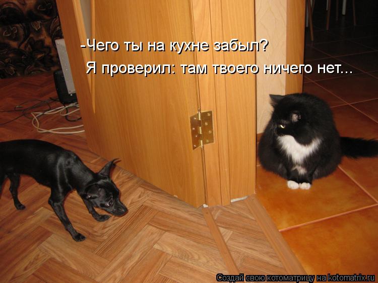 Котоматрица: -Чего ты на кухне забыл? Я проверил: там твоего ничего нет...