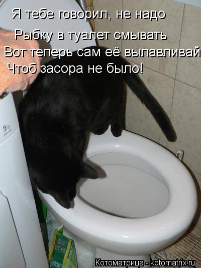 Котоматрица: Я тебе говорил, не надо Рыбку в туалет смывать Вот теперь сам её вылавливай Чтоб засора не было!