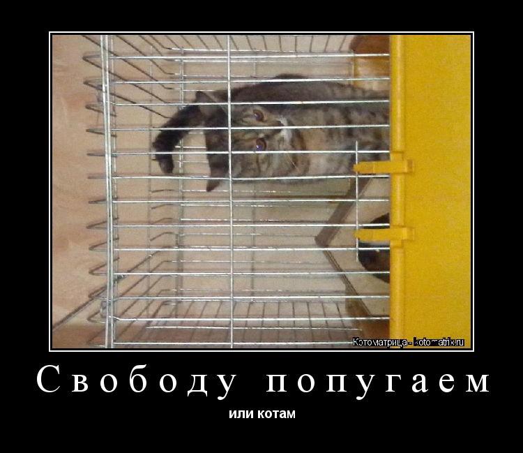 Котоматрица: Свободу попугаем или котам
