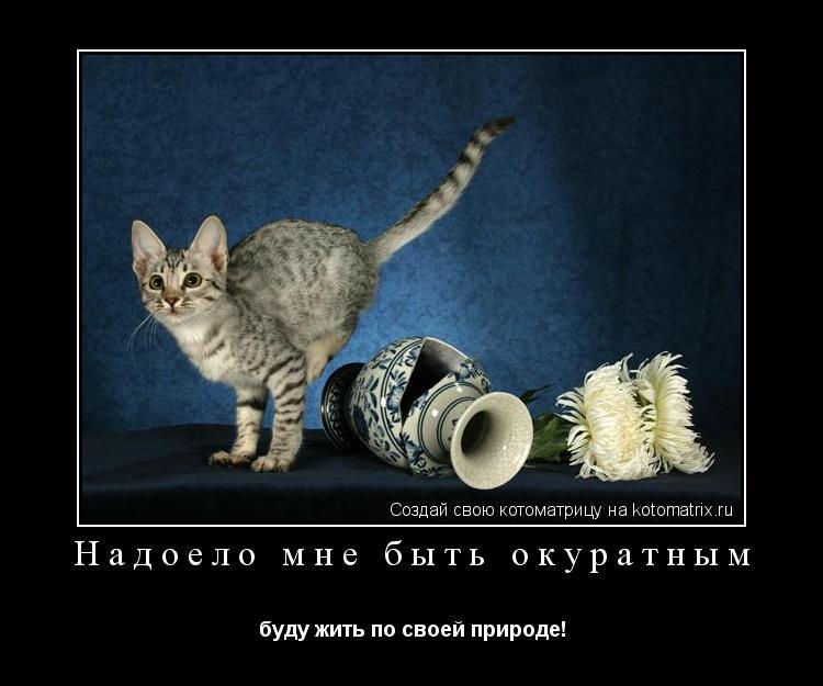 Котоматрица: Надоело мне быть окуратным буду жить по своей природе!