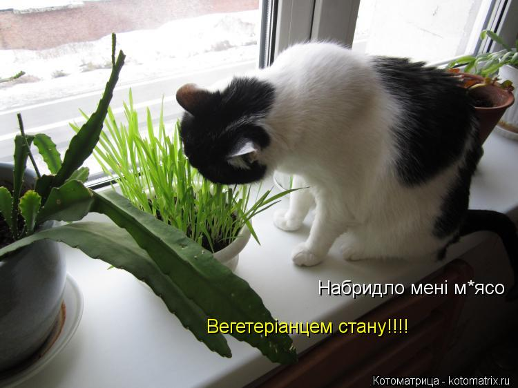 Котоматрица: Набридло мені м*ясо Набридло мені м*ясо Вегетеріанцем стану!!!!
