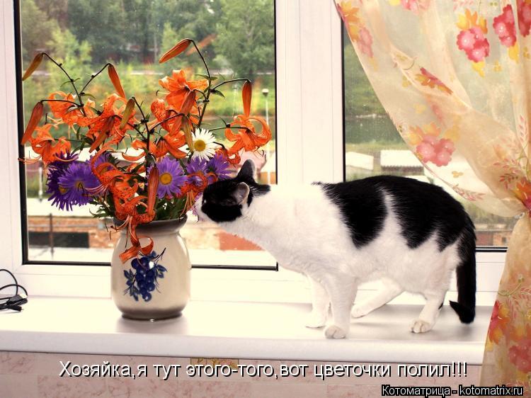 Котоматрица: Хозяйка,я тут этого-того,вот цветочки полил!!!