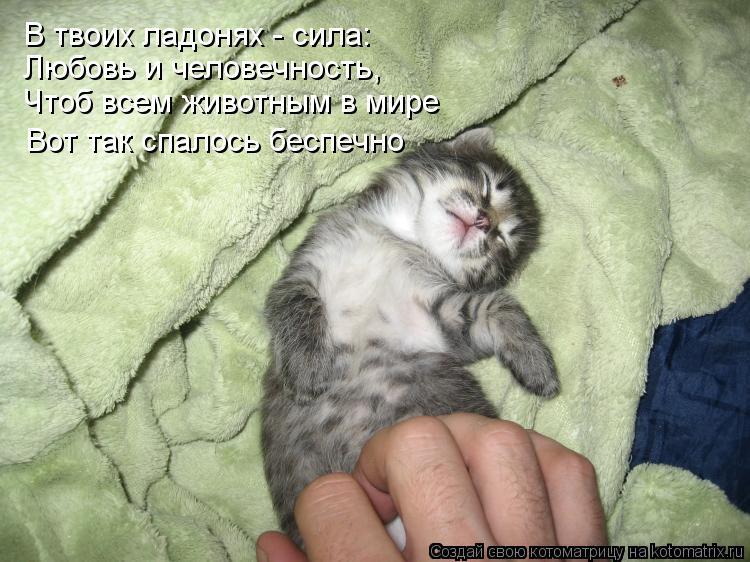 Котоматрица: Чтоб всем животным в мире Вот так спалось беспечно Любовь и человечность, В твоих ладонях - сила: