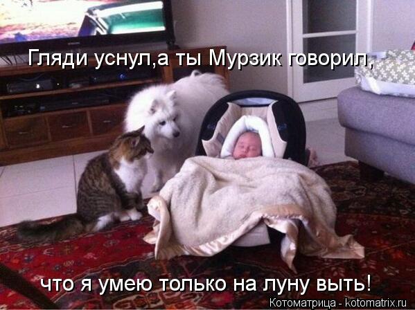 Котоматрица: Гляди уснул,а ты Мурзик говорил, что я умею только на луну выть!