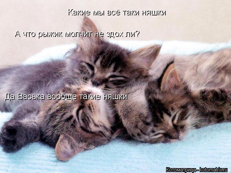 Котоматрица: Какие мы всё таки няшки Да Васька вообще такие няшки Да Васька вообще такие няшки Какие мы всё таки няшки А что рыжик молчит не здох ли?
