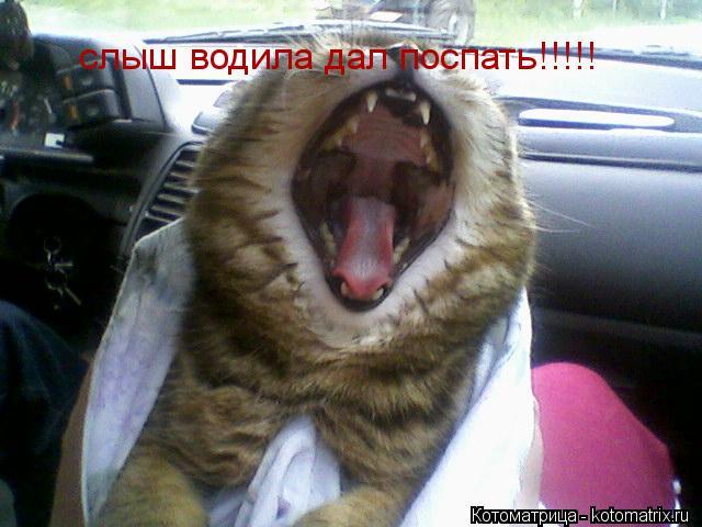 Котоматрица: слыш водила дал поспать!!!!!
