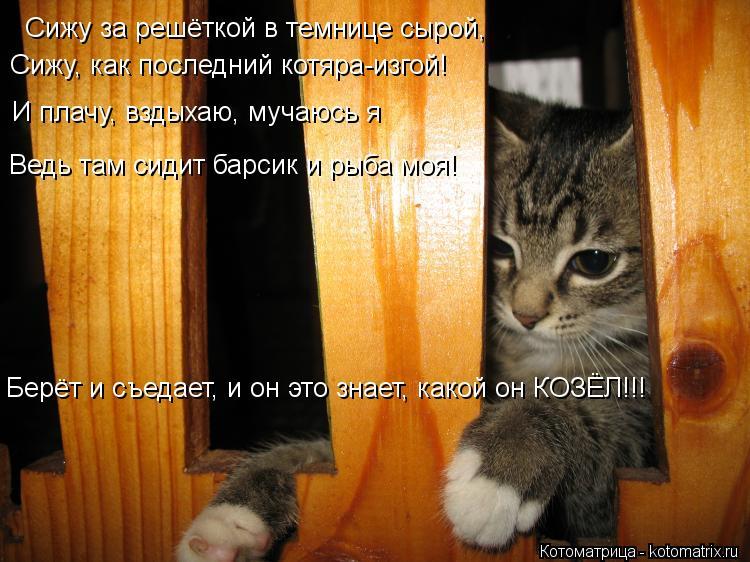 Котоматрица: Сижу за решёткой в темнице сырой, Сижу, как последний котяра-изгой! И плачу, вздыхаю, мучаюсь я Ведь там сидит барсик и рыба моя! Берёт и съеда