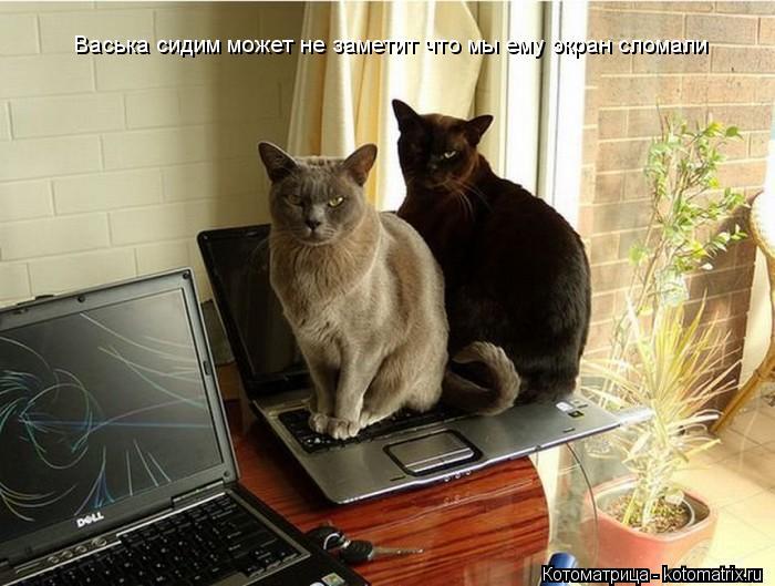 Котоматрица: Васька сидим может не заметит что мы ему экран сломали