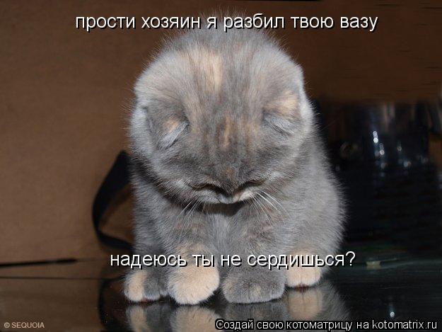 Котоматрица: прости хозяин я разбил твою вазу надеюсь ты не сердишься?