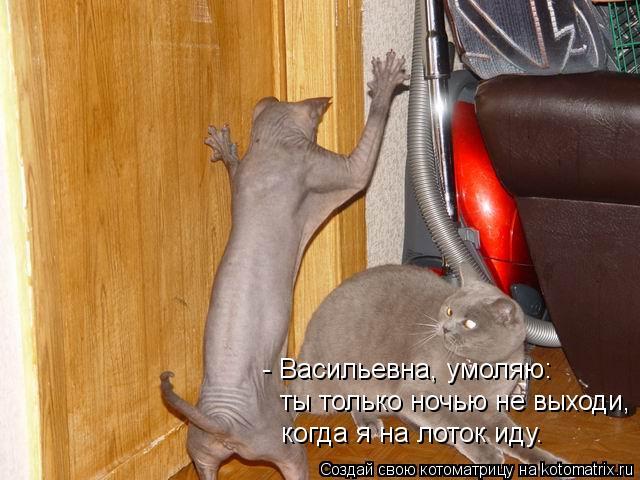 Котоматрица: - Васильевна, умоляю: ты только ночью не выходи, когда я на лоток иду.