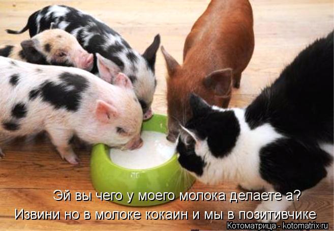 Котоматрица: Эй вы чего у моего молока делаете а? Извини но в молоке кокаин и мы в позитивчике