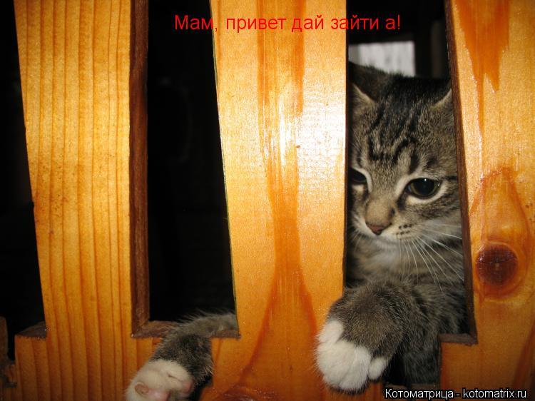 Котоматрица: Мам, привет дай зайти а!