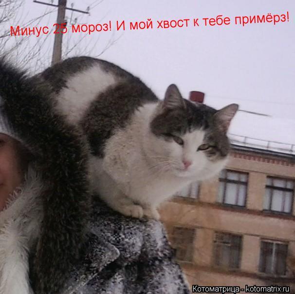 Котоматрица: Минус 25 мороз! И мой хвост к тебе примёрз! Минус 25 мороз! И мой хвост к тебе примёрз! Минус 25 мороз! И мой хвост к тебе примёрз!
