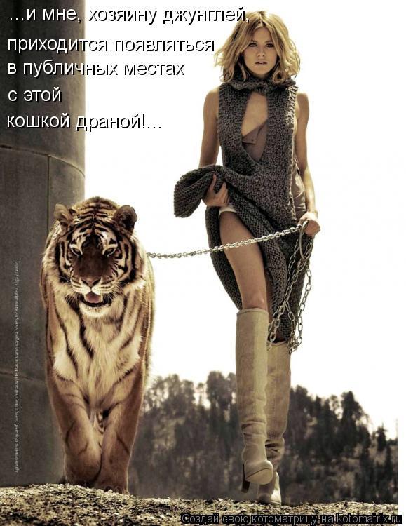 Котоматрица: ...и мне, хозяину джунглей,   приходится появляться   в публичных местах с этой   кошкой драной!...