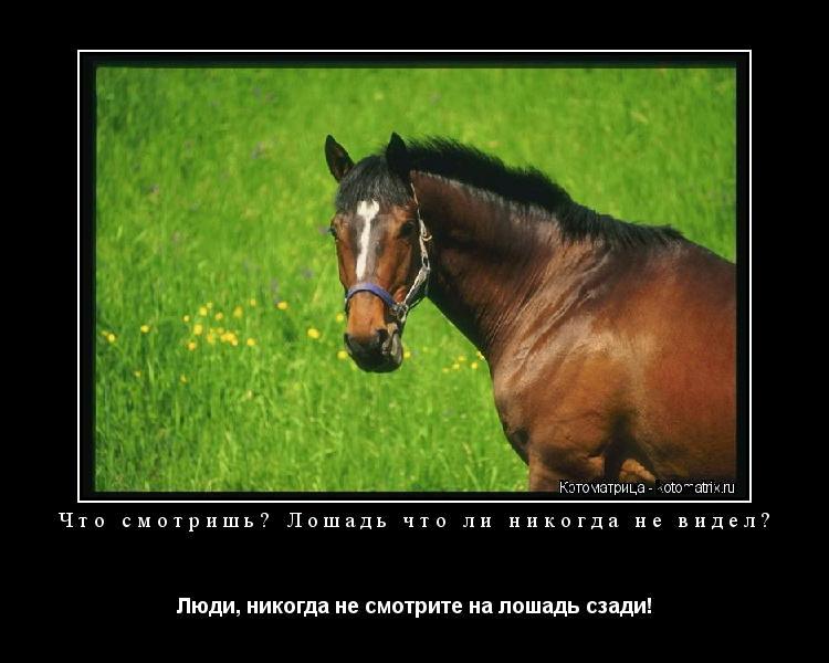Котоматрица: Что смотришь? Лошадь что ли никогда не видел? Люди, никогда не смотрите на лошадь сзади!