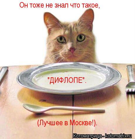 """Котоматрица: Он тоже не знал что такое, """"ДИФЛОПЕ"""". (Лучшее в Москве!)."""