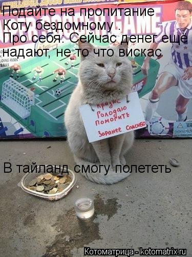 Котоматрица: Подайте на пропитание  Коту бездомному . Про себя: Сейчас денег ещё надают, не то что вискас В тайланд смогу полететь