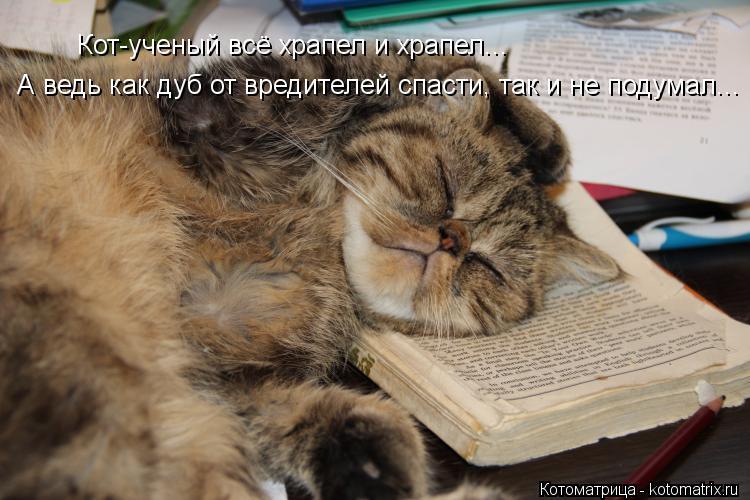 Котоматрица: Кот-ученый всё храпел и храпел...  А ведь как дуб от вредителей спасти, так и не подумал...
