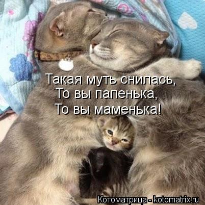 Котоматрица: Такая муть снилась, То вы папенька, То вы маменька!