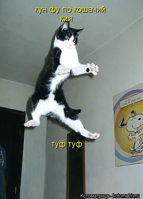 Котоматрица: кун фу по кошачий кия  туф туф