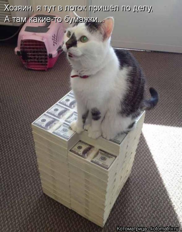 Котоматрица: Хозяин, я тут в лоток пришёл по делу, А там какие-то бумажки...