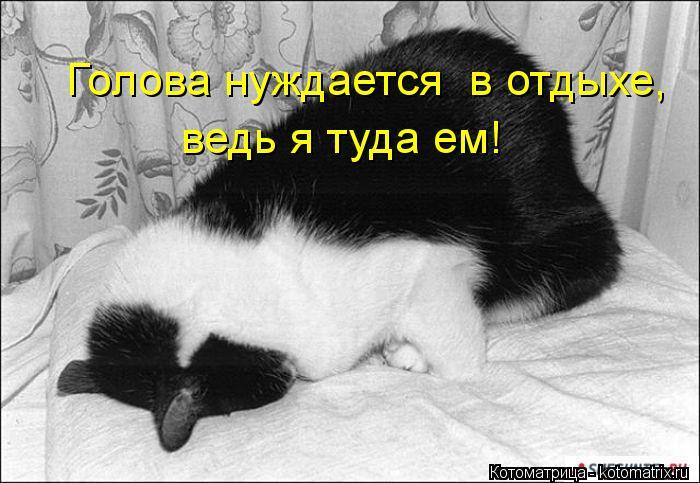 Котоматрица: Голова нуждается  в отдыхе, ведь я туда ем!