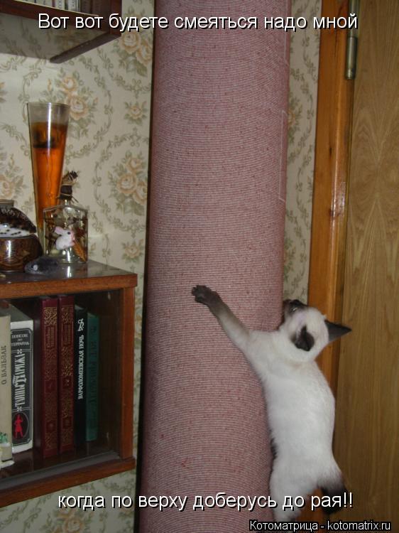 Котоматрица: Вот вот будете смеяться надо мной когда по верху доберусь до рая!!