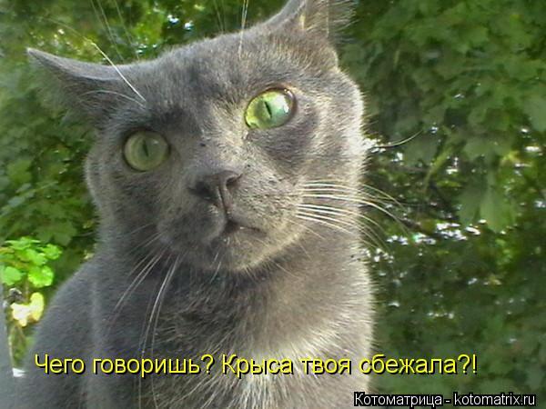 Котоматрица: Чего говоришь? Крыса твоя сбежала?!